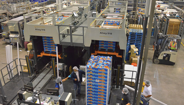Alvey 910 palletizers at work at Paramount Citrus