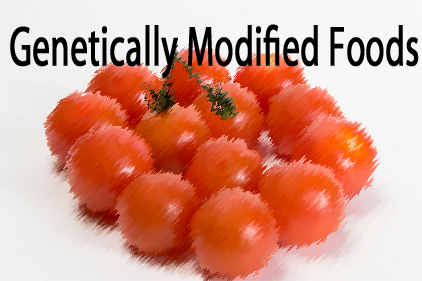 genetically modified foods at EssayPedia.com