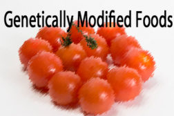New voice emerges in the debate over genetically modified foods