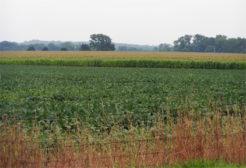 USDA says GMO Dow seeds ok