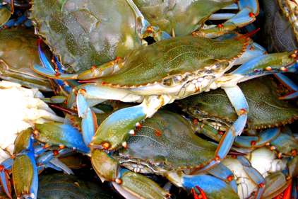 Oceana study reveals crab cake fraud