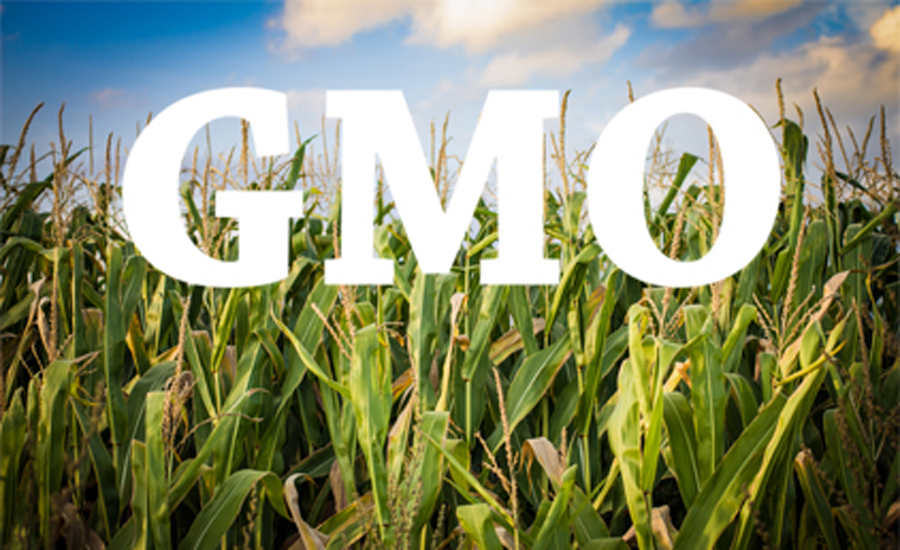 obama signs bill requiring labels for gmo foods  gmo corn