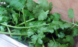 FDA issues ban on some Mexican cilantro