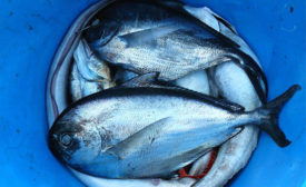 Oceana applauds seafood fraud bill