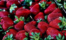 Edible coatings may increase shelf life of strawberries