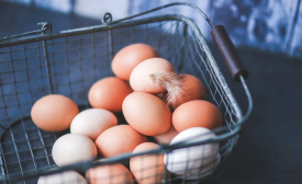 General Mills plans move to cage-free eggs