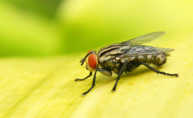 Summer pest prevention tips for food facilities
