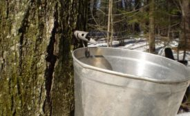 Maple syrup producers ask feds to crack down on 'misbranding'