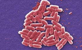 E. coli outbreaks shake up Chipotle, Costco