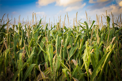 AFFI urges changes to Renewable Fuel Standard