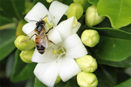 EPA mandates new labels to protect bees