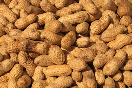 China Suspends US Sunland Nut Imports