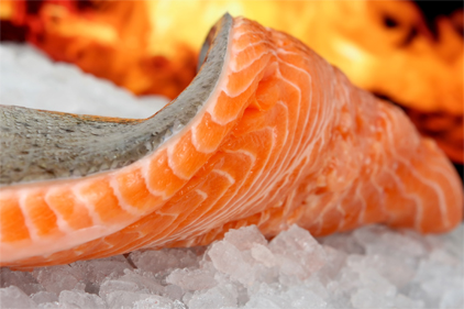 Consumers not interested in GMO salmon