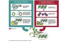 next-generation GMOs