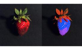 Strawberry Comparison