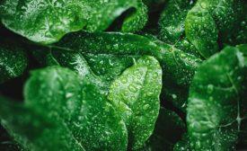 FE 0921 Produce Safety: Washing Produce