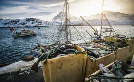 Nordic seafood – Starfrost