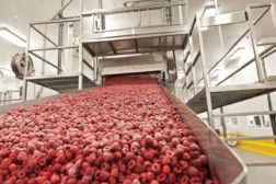 frozen raspberries gea aerofreeze ay