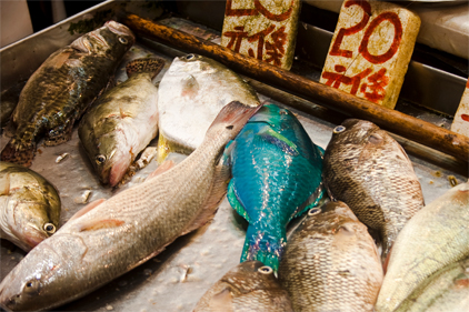 Up to 32 percent of seafood caught illegally