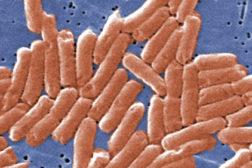 Salmonella-CDC
