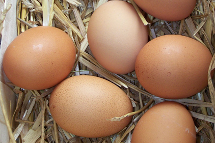 Eggs from uncaged hens