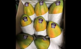 Papaya salmonella warning