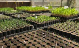BioConsortia runs tests on corn to discover nitrogen-fixing bacteria specific to corn